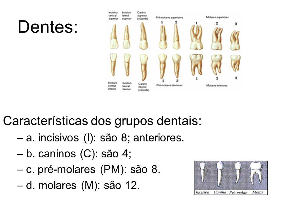 Dentes: -Dentições: a - Temporária (decídua): 20 dentes a partir dos 6 anos de idade (8 molares, 8 incisivos e 4 caninos).