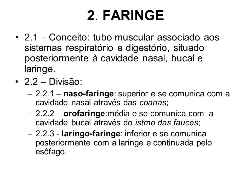 2. FARINGE 2.1 – Conceito: tubo muscular associado aos sistemas respiratório e digestório, situado posteriormente à cavidade nasal, bucal e laringe. 2