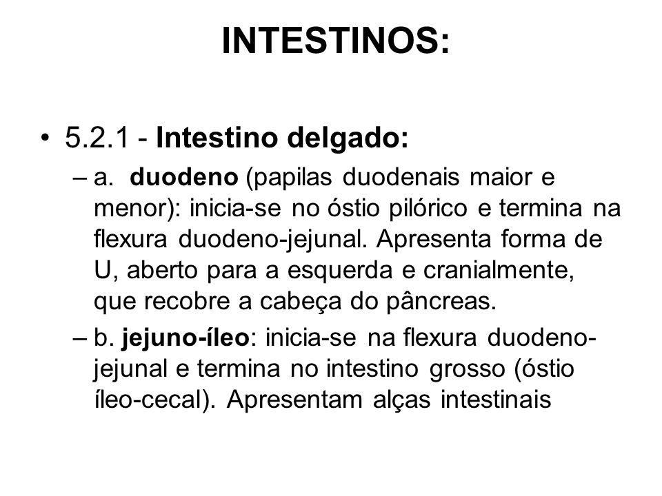 INTESTINOS: 5.2.1 - Intestino delgado: –a.