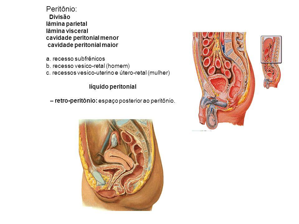 Comportamentos do peritônio: a. omento b. ligamento c. prega d. meso
