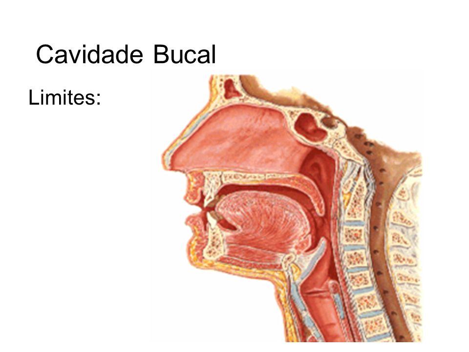 Língua: Conceito Órgão muscular revestido por mucosa e que exerce funções na mastigação, na deglutição, como órgão gustativo e na articulação da palavra.
