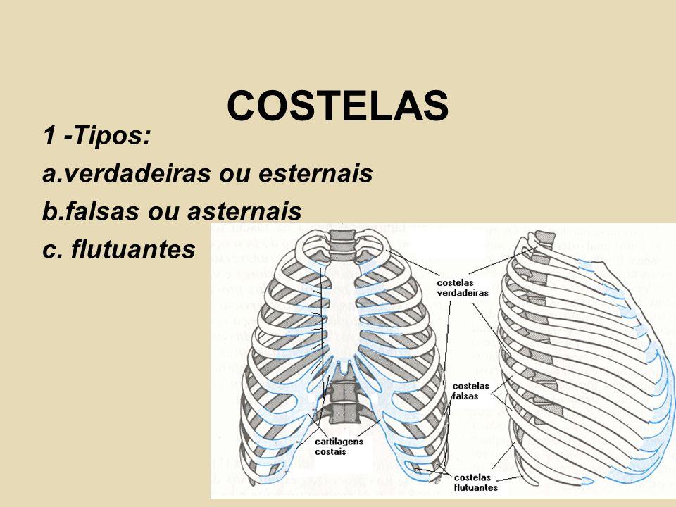 COSTELAS 1 -Tipos: a.verdadeiras ou esternais b.falsas ou asternais c. flutuantes