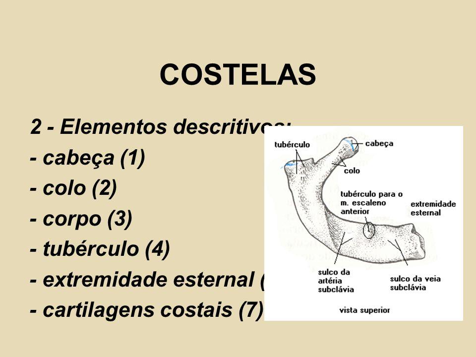 COSTELAS 2 - Elementos descritivos: - cabeça (1) - colo (2) - corpo (3) - tubérculo (4) - extremidade esternal (6) - cartilagens costais (7)