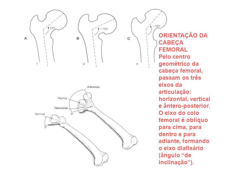 ORIENTAÇÃO DA CABEÇA FEMORAL Pelo centro geométrico da cabeça femoral, passam os três eixos da articulação: horizontal, vertical e ântero-posterior. O