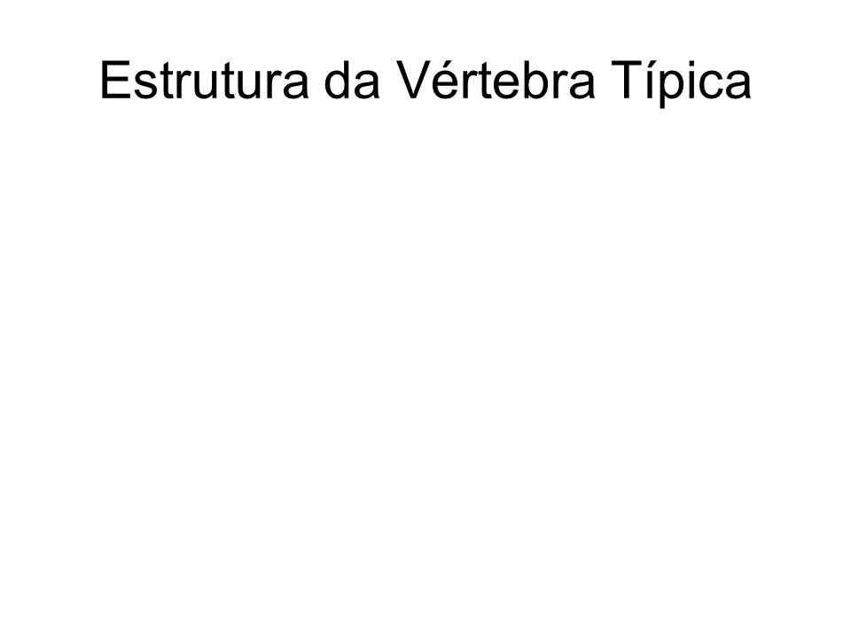 OSSOS DA COLUNA VERTEBRAL 4 - Características diferenciais entre as vértebras das regiões da coluna vertebral: 4.1- vértebras cervicais: forames transversos 4.2- vértebras torácicas: fóveas costais 4.3- vértebras lombares: processos mamilares 4.4- vértebras sacrais: sacro 4.5- vértebras coccígeas: cóccix