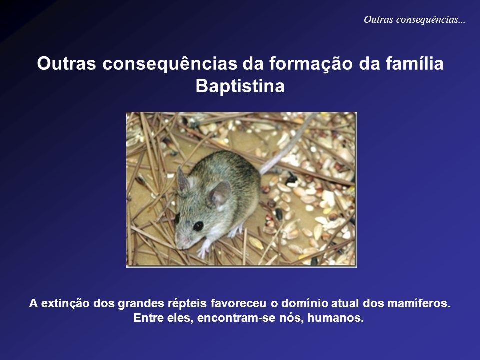 Outras consequências da formação da família Baptistina A extinção dos grandes répteis favoreceu o domínio atual dos mamíferos. Entre eles, encontram-s