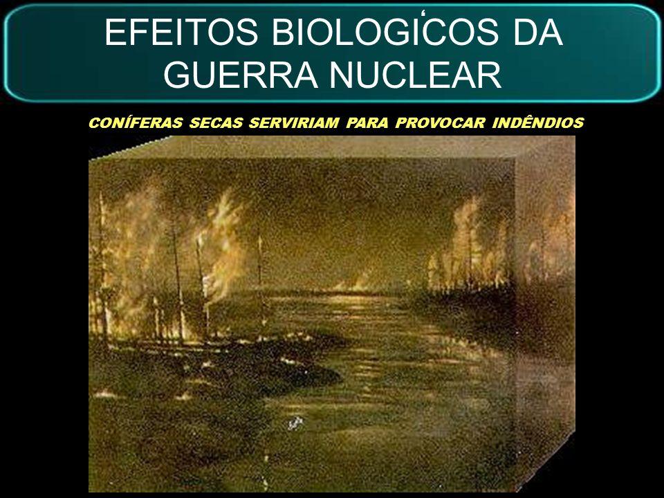 EFEITOS BIOLOGICOS DA GUERRA NUCLEAR DESLOCAMENTO URBANO UMA SEMANA APÓS A GUERRA, A QUANTIDADE DE LUZ DIMINUI DRÁSTICAMENTE.