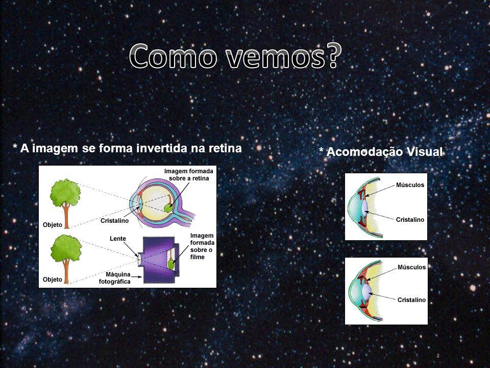 * A imagem se forma invertida na retina * Acomodação Visual