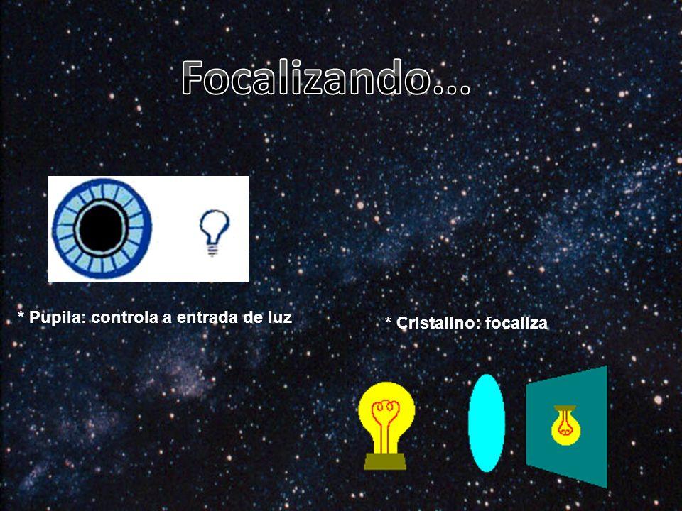 * Pupila: controla a entrada de luz * Cristalino: focaliza