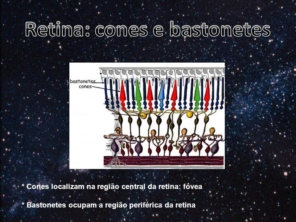 * Cones localizam na região central da retina: fóvea * Bastonetes ocupam a região periférica da retina