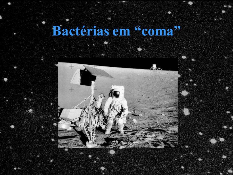 Bactérias em coma