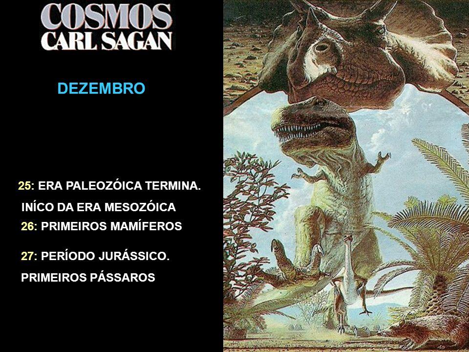 O CALENDÁRIO CÓSMICO DEZEMBRO 25: ERA PALEOZÓICA TERMINA. INÍCO DA ERA MESOZÓICA 26: PRIMEIROS MAMÍFEROS 27: PERÍODO JURÁSSICO. PRIMEIROS PÁSSAROS