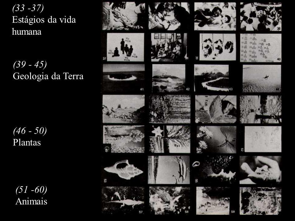 (33 -37) Estágios da vida humana (39 - 45) Geologia da Terra (46 - 50) Plantas (51 -60) Animais