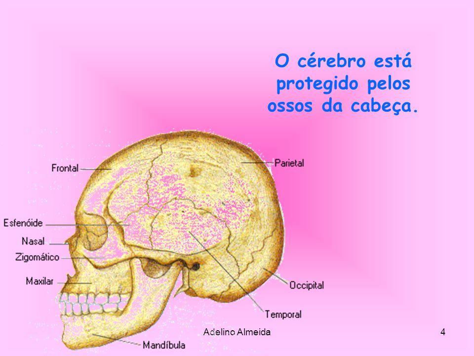 Adelino Almeida5 Fixa.Função de suporte Sem os ossos o nosso corpo seria uma massa mole.
