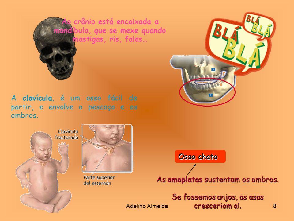 Adelino Almeida9 Os 12 pares de costelas são um grupo especial no batalhão dos ossos.