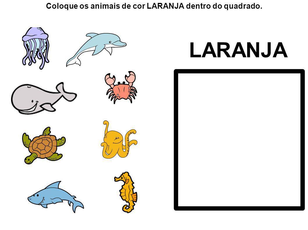LARANJA Coloque os animais de cor LARANJA dentro do quadrado.