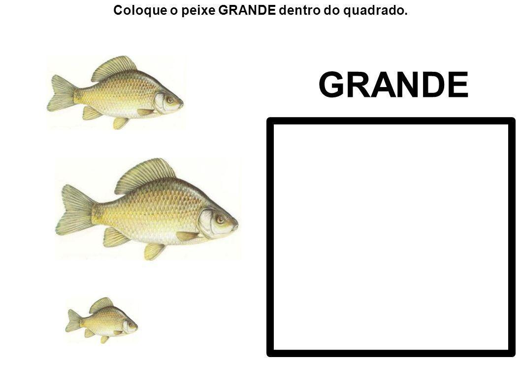 GRANDE Coloque o peixe GRANDE dentro do quadrado.