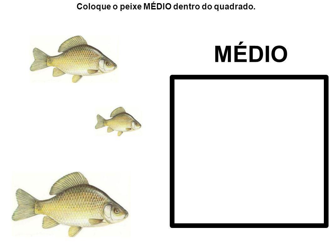 PEQUENO Coloque o peixe PEQUENO dentro do quadrado.