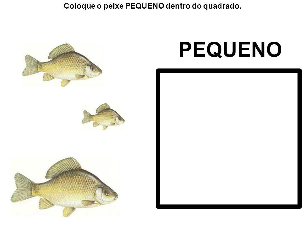 Coloque os animais do mesmo tamanho do exemplo dentro do quadrado.