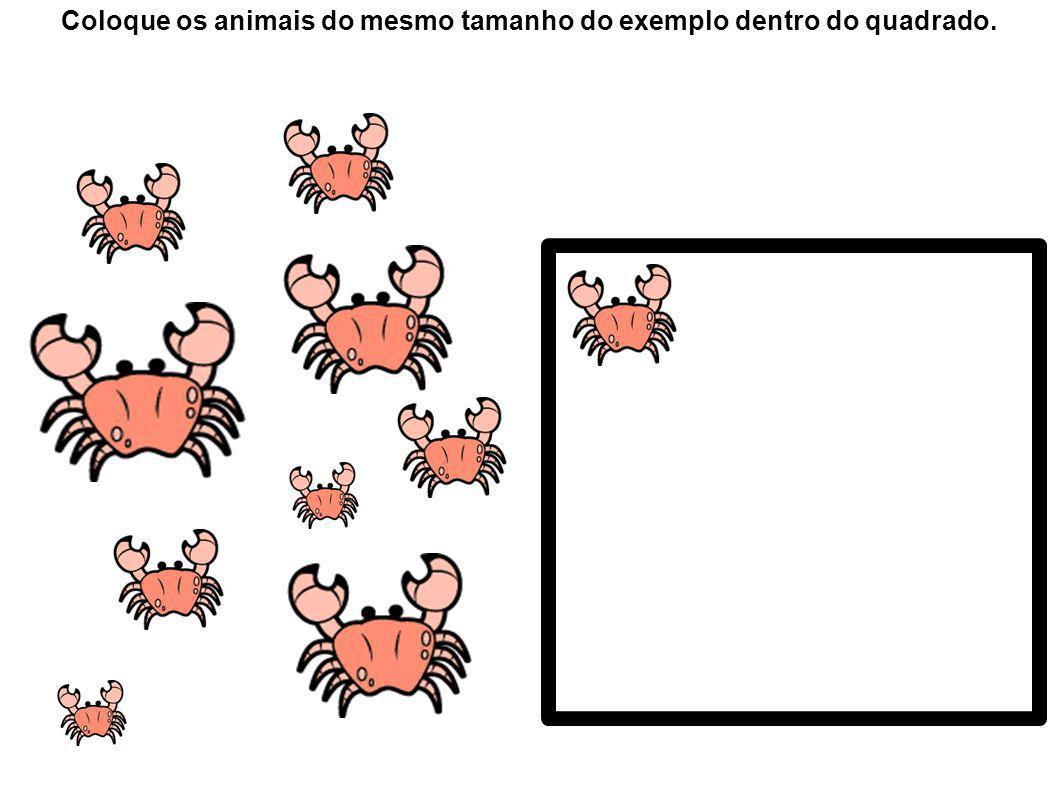 1 Coloque 1 animal dentro do quadrado.