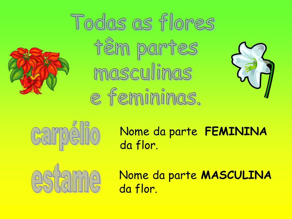 Nome da parte FEMININA da flor. Nome da parte MASCULINA da flor.