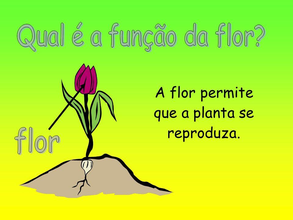 A flor permite que a planta se reproduza.