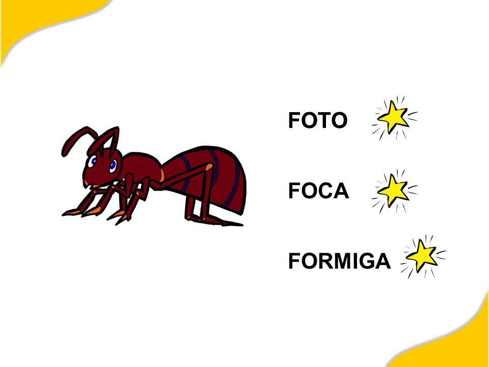 FOTO FOCA FORMIGA FOTO