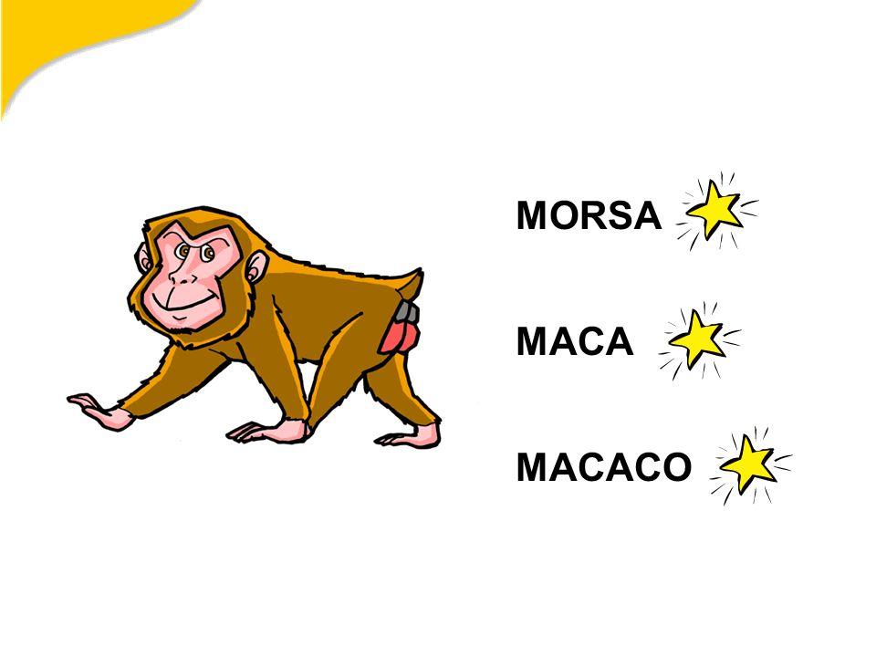 MORSA MACA MACACO