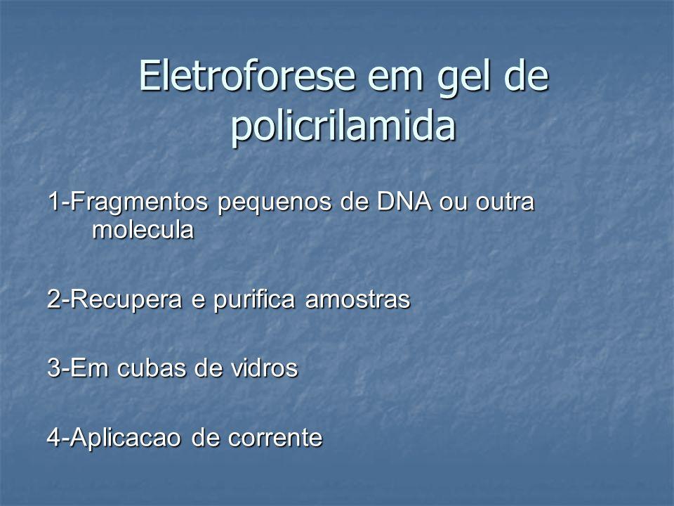 Eletroforese em gel de policrilamida 1-Fragmentos pequenos de DNA ou outra molecula 2-Recupera e purifica amostras 3-Em cubas de vidros 4-Aplicacao de