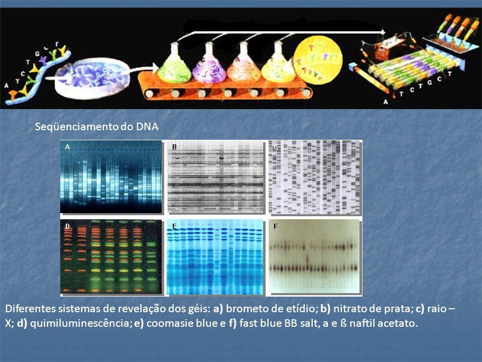 Aplicações 1- Identificação de pessoas: em testes de paternidade, comparando o DNA do suposto pai, da mãe e do filho; 2- na identificação de criminosos.