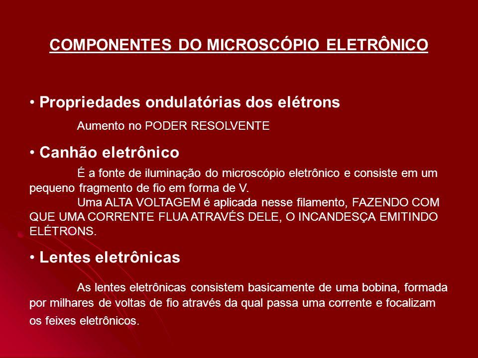 COMPONENTES DO MICROSCÓPIO ELETRÔNICO Propriedades ondulatórias dos elétrons Aumento no PODER RESOLVENTE Canhão eletrônico É a fonte de iluminação do