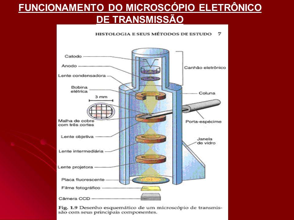 CÁTODO ÂNODO AUMENTA VELOCIDADE DOS ELETRONS FORMAM FEIXES DE ELÉTRONS DESVIADOS NAS BOBINAS ELÉTRICAS (campo magnético) LENTE CONDENSADORA (focaliza) LENTE OBJETIVA (aumenta imagem) DETECTORES