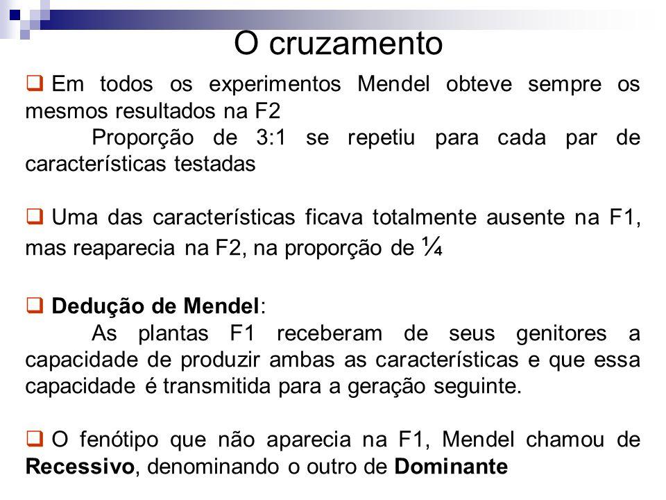O cruzamento Em todos os experimentos Mendel obteve sempre os mesmos resultados na F2 Proporção de 3:1 se repetiu para cada par de características tes