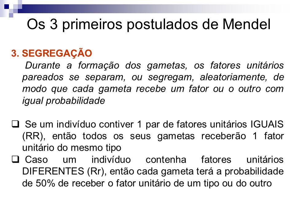 Os 3 primeiros postulados de Mendel 3. SEGREGAÇÃO Durante a formação dos gametas, os fatores unitários pareados se separam, ou segregam, aleatoriament