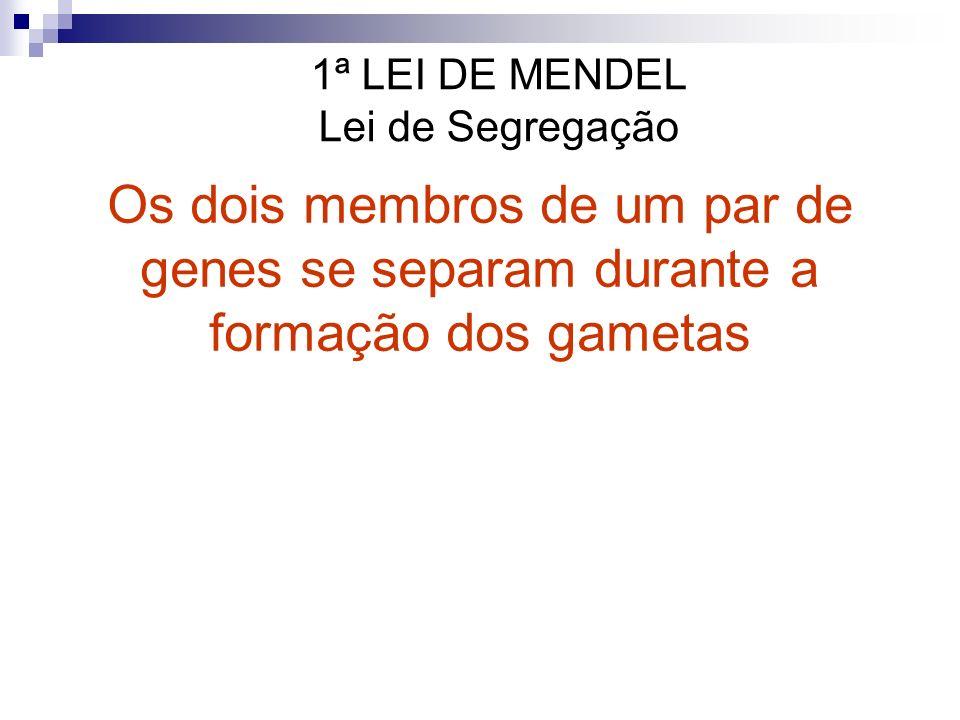 1ª LEI DE MENDEL Lei de Segregação Os dois membros de um par de genes se separam durante a formação dos gametas