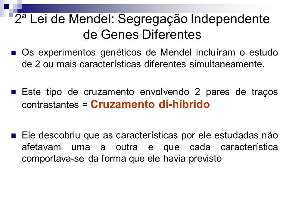 2ª Lei de Mendel: Segregação Independente de Genes Diferentes Os experimentos genéticos de Mendel incluíram o estudo de 2 ou mais características dife
