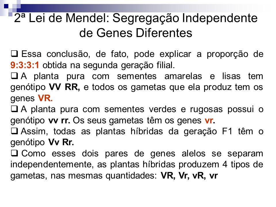 2ª Lei de Mendel: Segregação Independente de Genes Diferentes Essa conclusão, de fato, pode explicar a proporção de 9:3:3:1 obtida na segunda geração