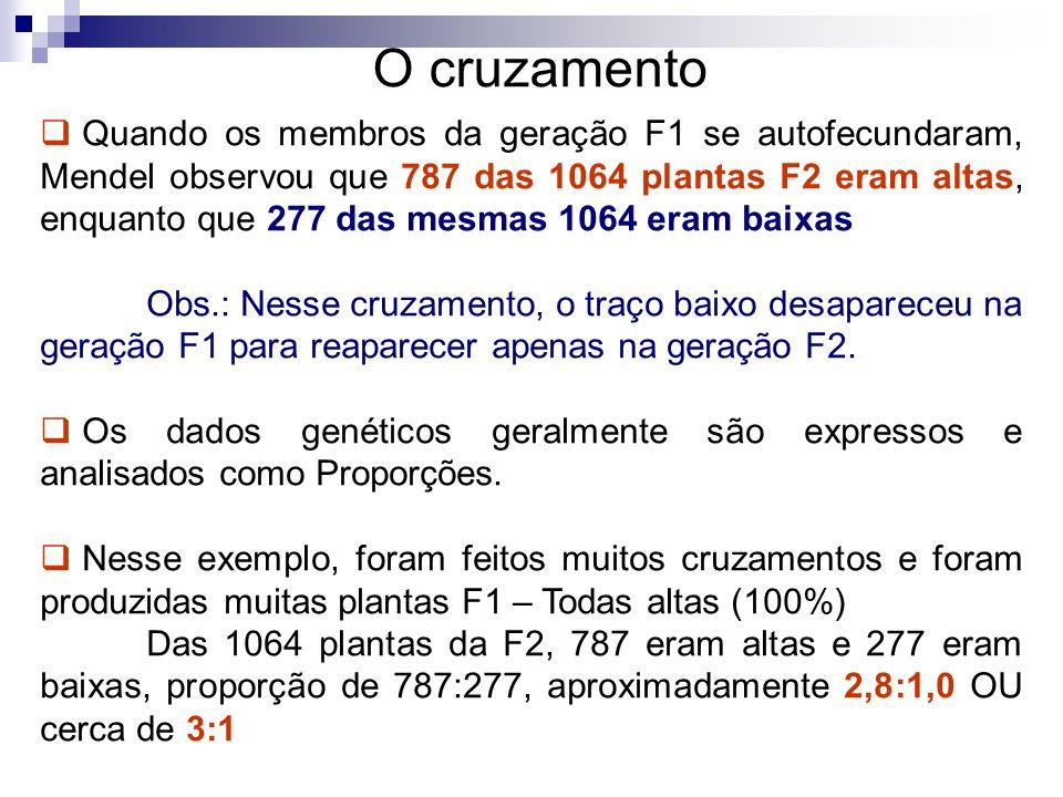 O cruzamento Quando os membros da geração F1 se autofecundaram, Mendel observou que 787 das 1064 plantas F2 eram altas, enquanto que 277 das mesmas 10