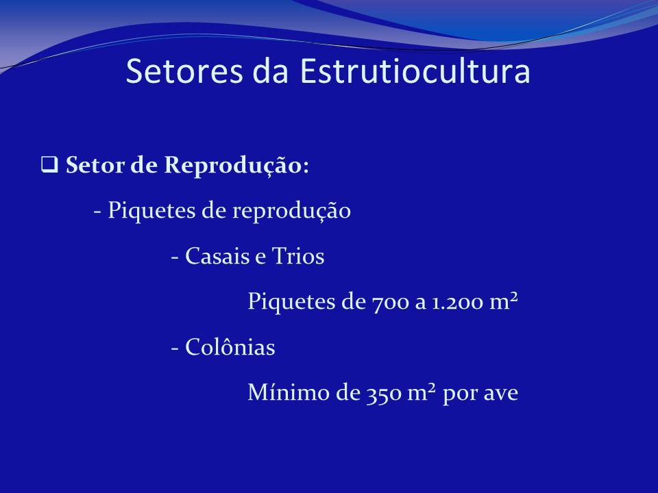 Setores da Estrutiocultura Setor de Reprodução: - Piquetes de reprodução - Casais e Trios Piquetes de 700 a 1.200 m² - Colônias Mínimo de 350 m² por a