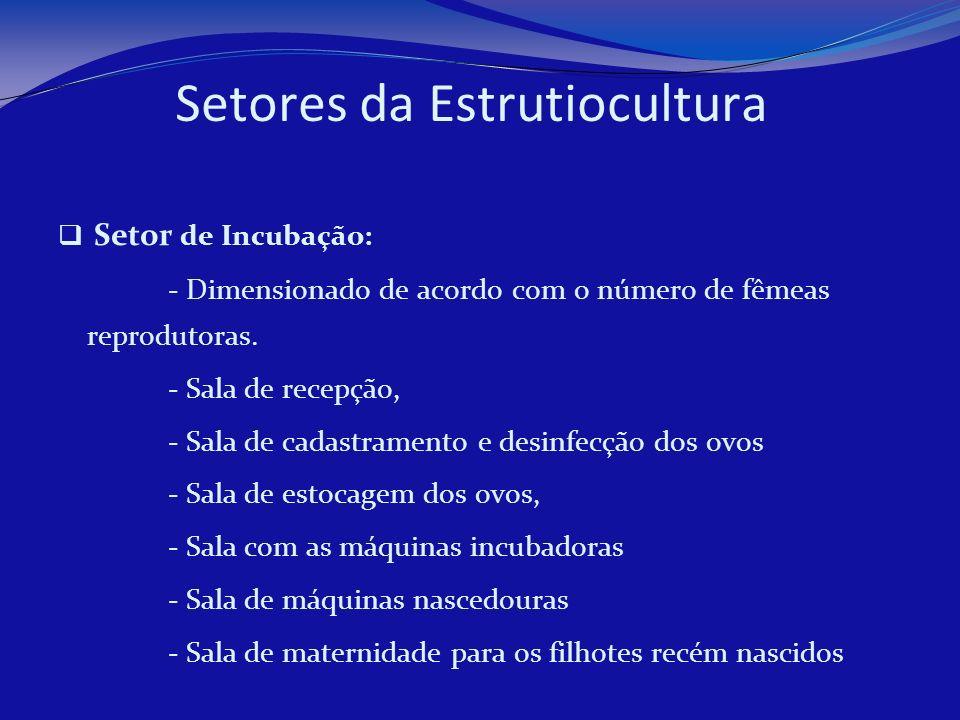 Setores da Estrutiocultura Setor de Incubação: - Dimensionado de acordo com o número de fêmeas reprodutoras. - Sala de recepção, - Sala de cadastramen