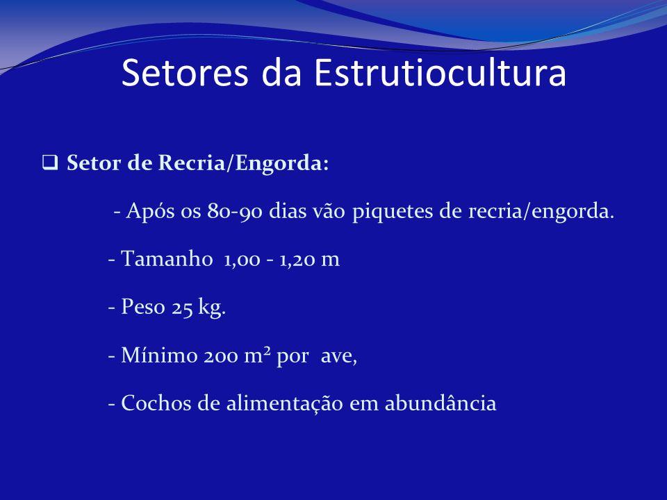 Setores da Estrutiocultura Setor de Recria/Engorda: - Após os 80-90 dias vão piquetes de recria/engorda. - Tamanho 1,00 - 1,20 m - Peso 25 kg. - Mínim