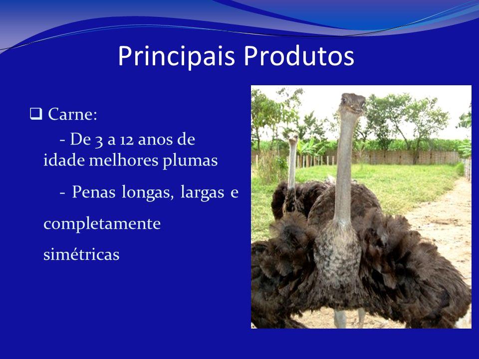 Principais Produtos Carne: - De 3 a 12 anos de idade melhores plumas - Penas longas, largas e completamente simétricas