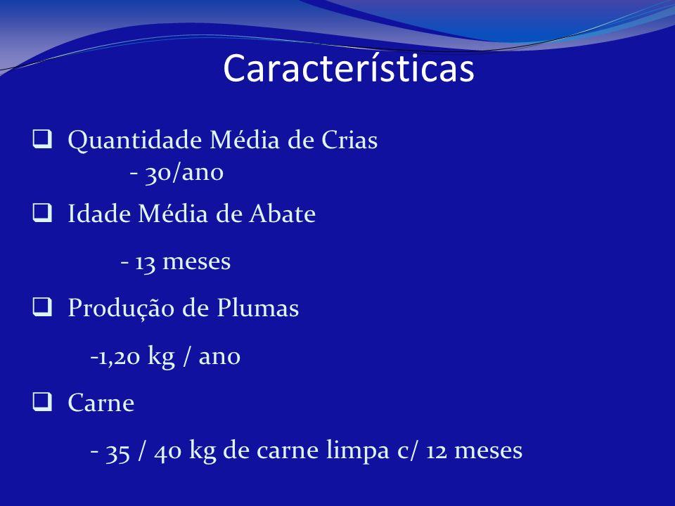Características Quantidade Média de Crias - 30/ano Idade Média de Abate - 13 meses Produção de Plumas -1,20 kg / ano Carne - 35 / 40 kg de carne limpa