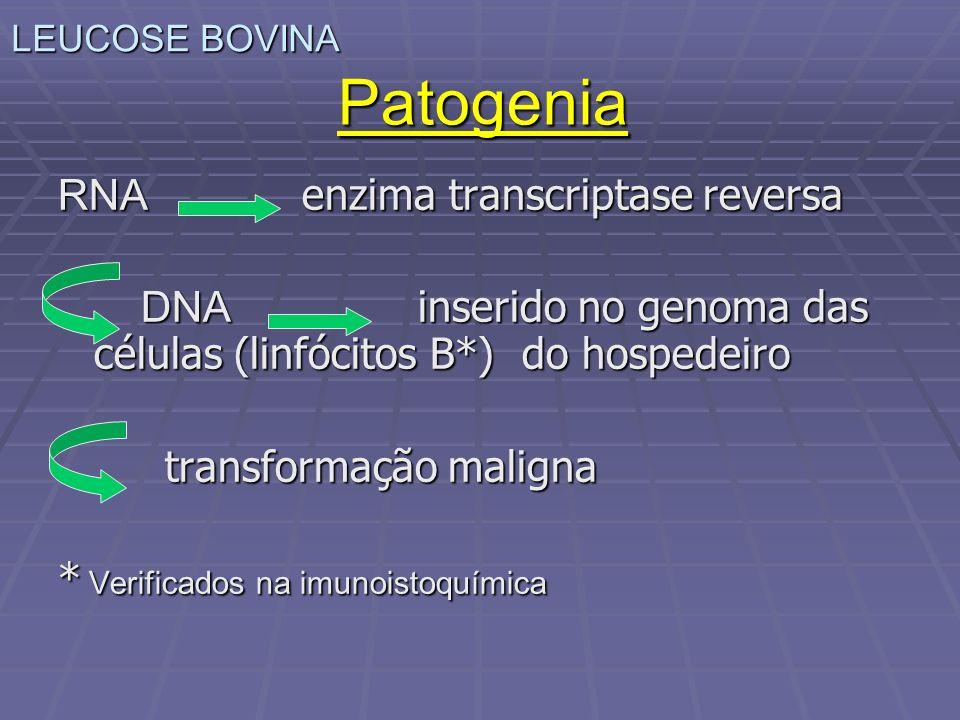 RNA enzima transcriptase reversa DNA inserido no genoma das células (linfócitos B*) do hospedeiro DNA inserido no genoma das células (linfócitos B*) d