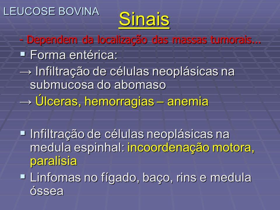 - Dependem da localização das massas tumorais... Forma entérica: Forma entérica: Infiltração de células neoplásicas na submucosa do abomaso Infiltraçã