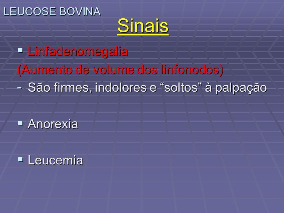 Sinais Linfadenomegalia Linfadenomegalia (Aumento de volume dos linfonodos) - São firmes, indolores e soltos à palpação Anorexia Anorexia Leucemia Leu