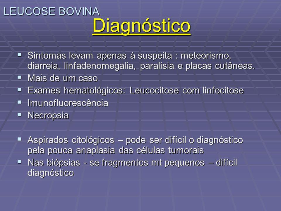 LEUCOSE BOVINA Diagnóstico Sintomas levam apenas à suspeita : meteorismo, diarreia, linfadenomegalia, paralisia e placas cutâneas. Sintomas levam apen