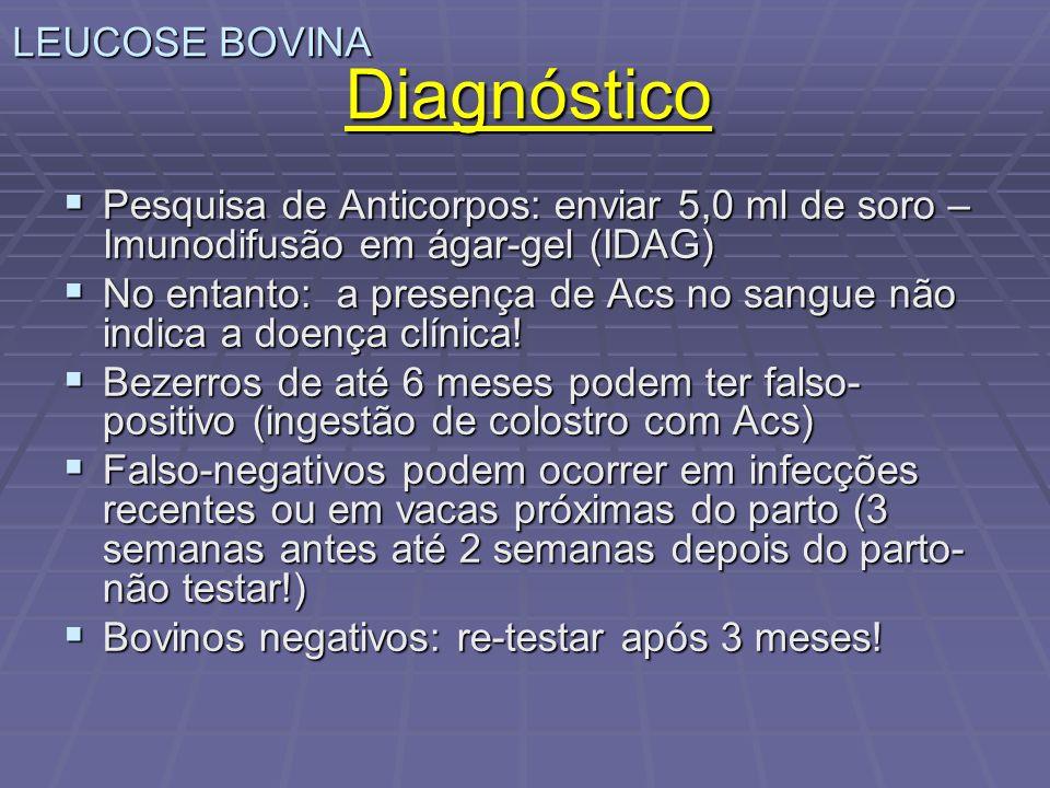 LEUCOSE BOVINA Diagnóstico Pesquisa de Anticorpos: enviar 5,0 ml de soro – Imunodifusão em ágar-gel (IDAG) Pesquisa de Anticorpos: enviar 5,0 ml de so