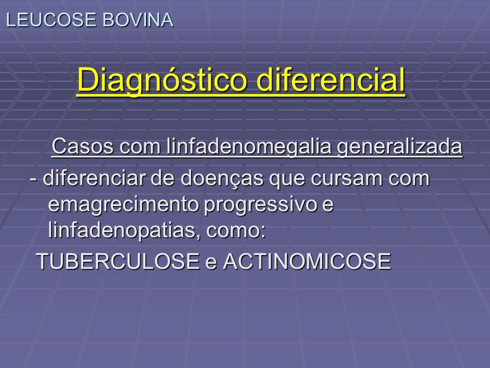LEUCOSE BOVINA Diagnóstico diferencial Casos com linfadenomegalia generalizada - diferenciar de doenças que cursam com emagrecimento progressivo e lin