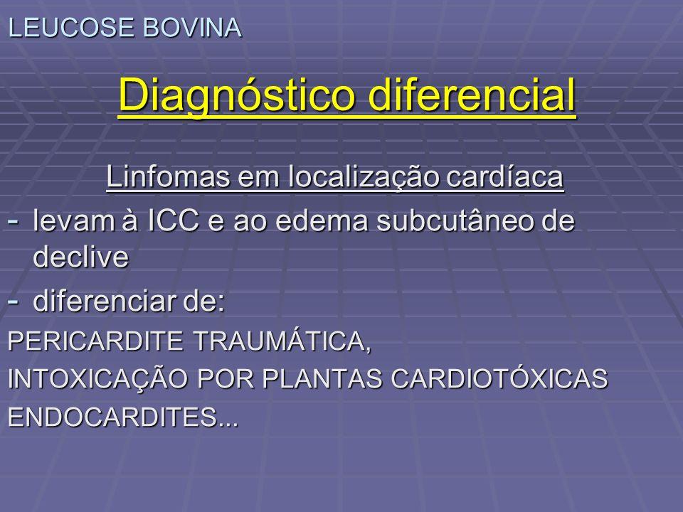 LEUCOSE BOVINA Diagnóstico diferencial Linfomas em localização cardíaca - levam à ICC e ao edema subcutâneo de declive - diferenciar de: PERICARDITE T